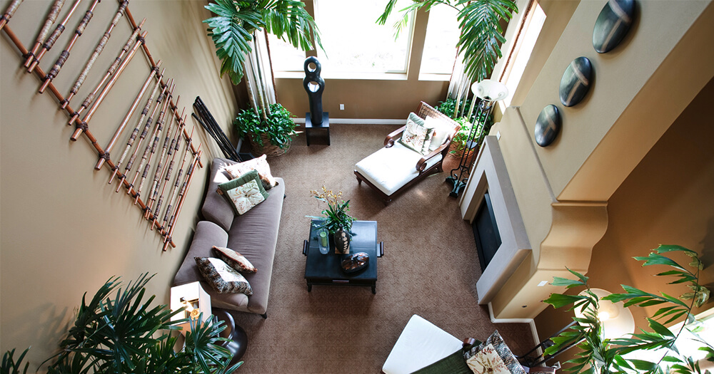 Why You Need To Interior Decorate With Plants