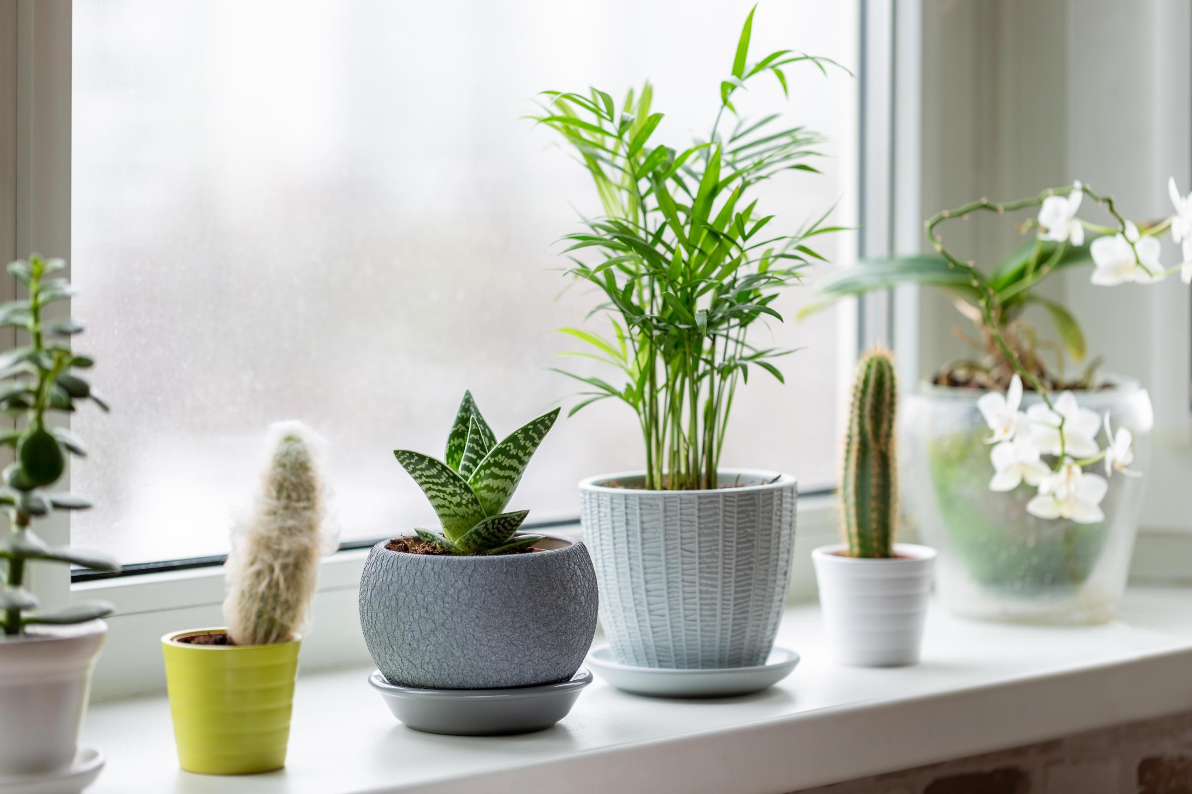 7 Indoor Gardening Tips for Thriving Houseplants