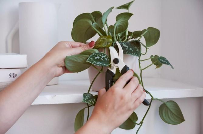 How to Prune Houseplants