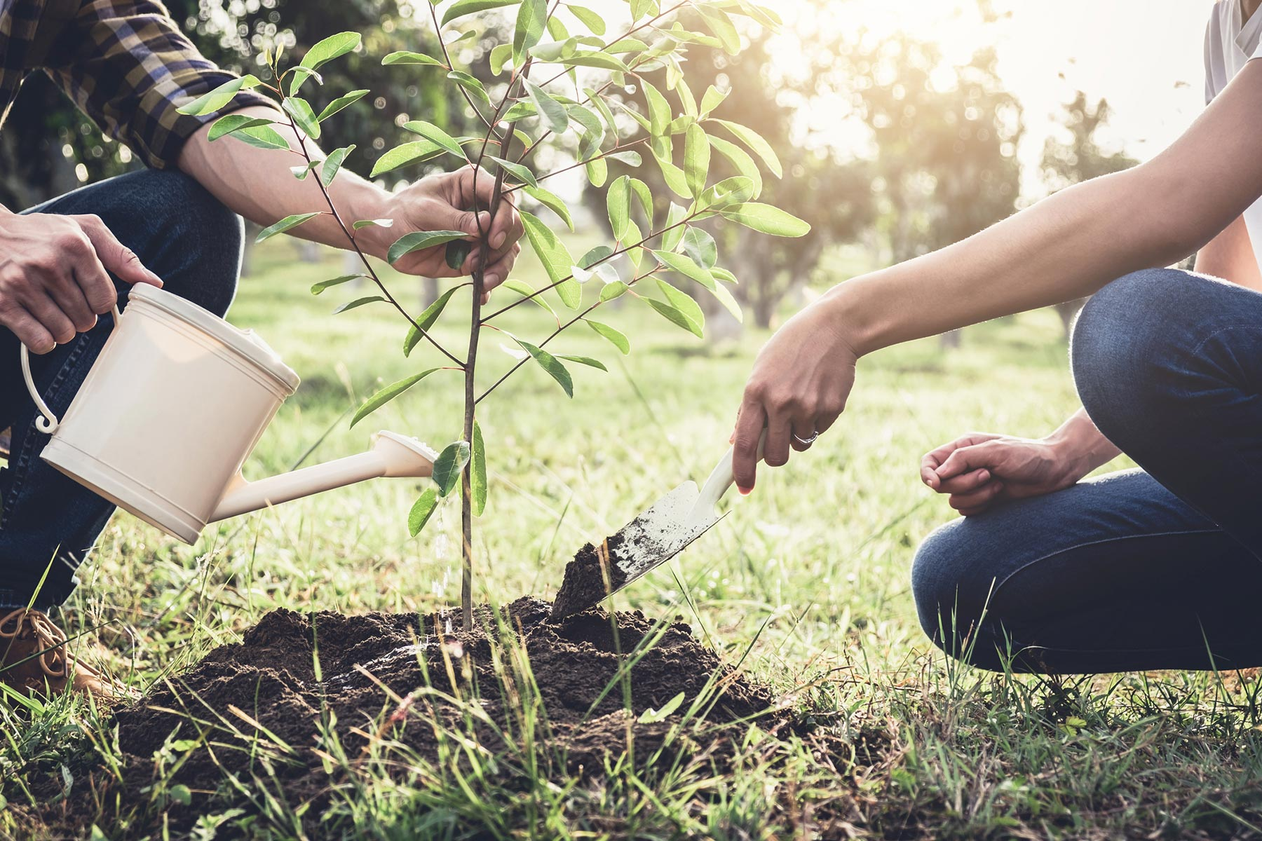 The Proper Way to Plant a Tree