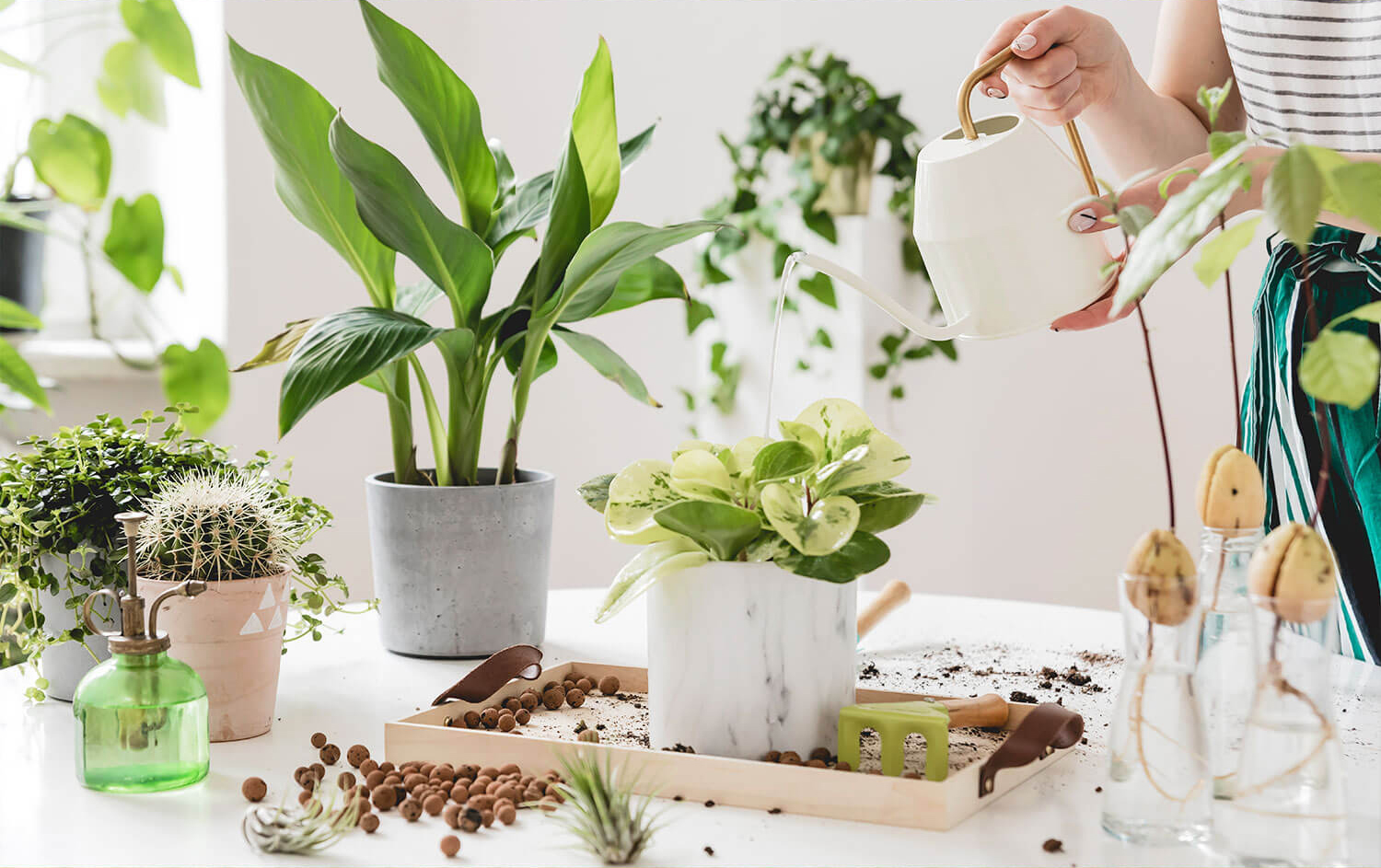 15 Brilliant and Easy Plant Care Tips