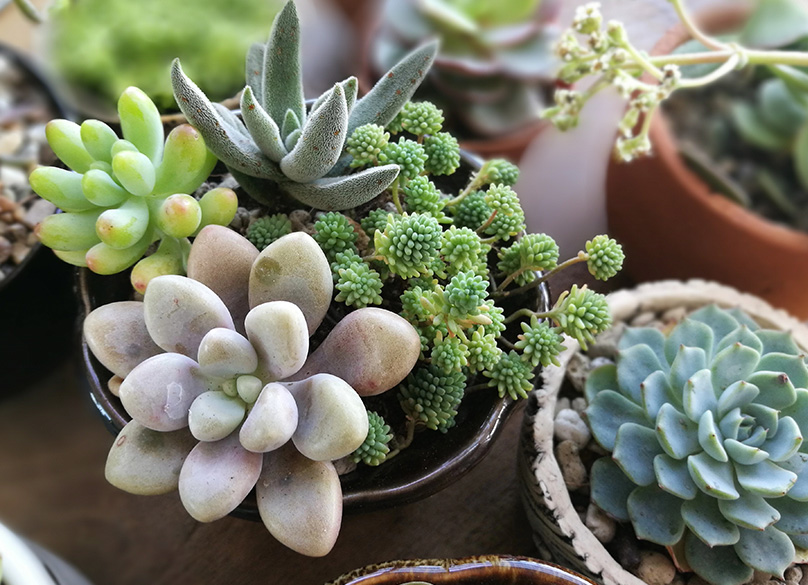 How to Plant & Care for Succulent Plants