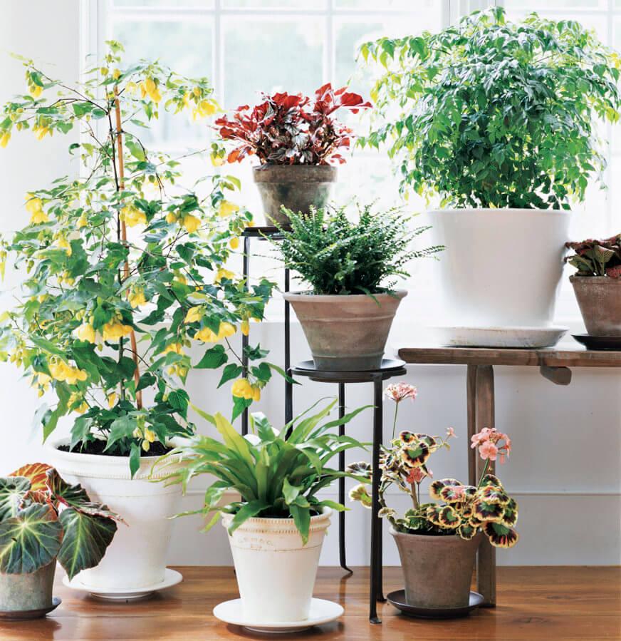 Attractive Ways to Include Indoor Plants in Your Decor
