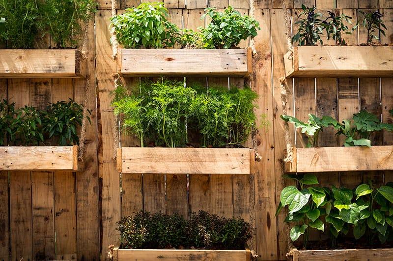 How to Organize Vegetable Garden
