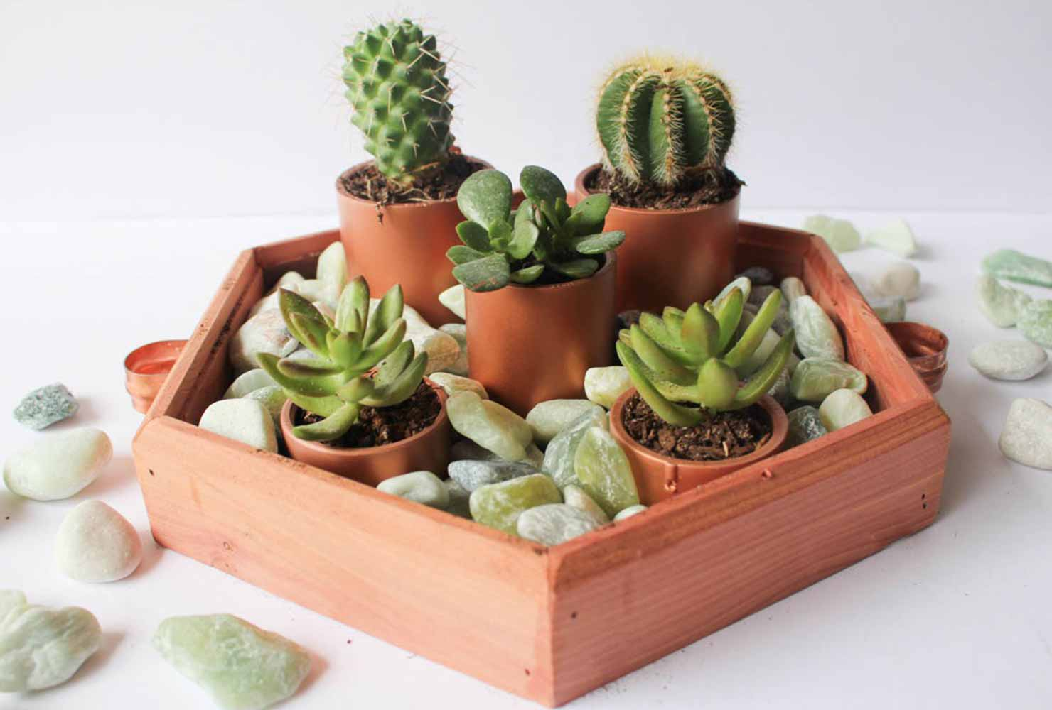 25 Indoor Plant Decor Ideas