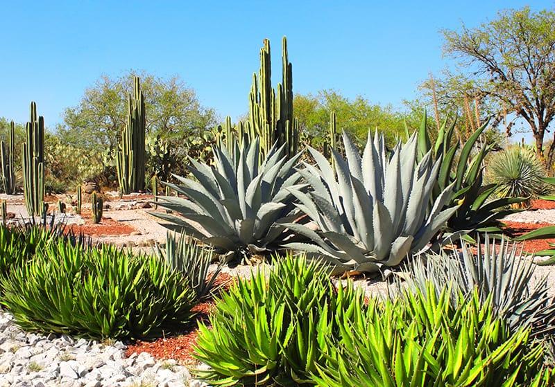 Great Desert Landscaping Ideas